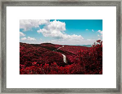 Blueberry In Winter Framed Print by Britten Adams