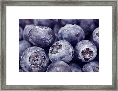 Blueberry Macro Framed Print by Kitty Ellis