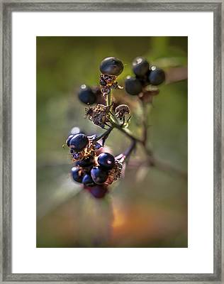 Blueberry Nr.1 Framed Print by Mah FineArt