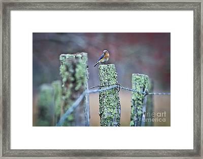 Bluebird 040517 Framed Print by Douglas Stucky