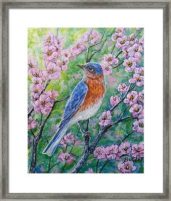 Bluebird And Blossoms Framed Print by Gail Butler