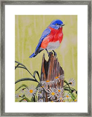 Bluebird And Daisies Framed Print