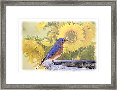 Bluebird And Sunflowers Framed Print