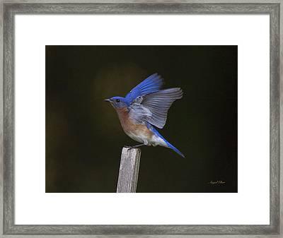 Bluebird  Framed Print by Angel Cher