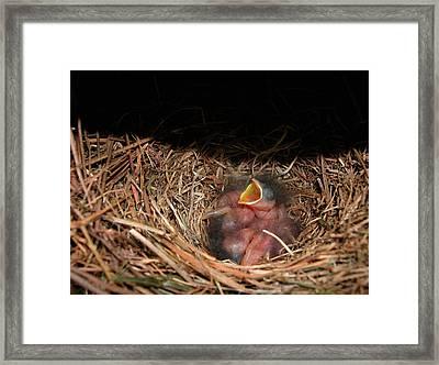 Framed Print featuring the photograph Bluebird Babies by Marie Hicks