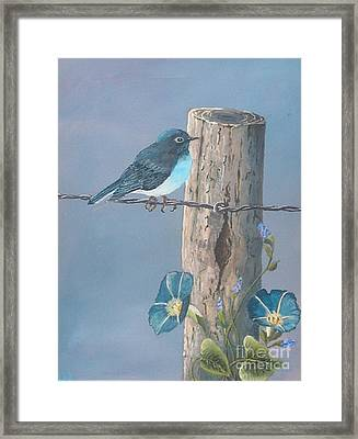 Bluebird Framed Print by John Wise