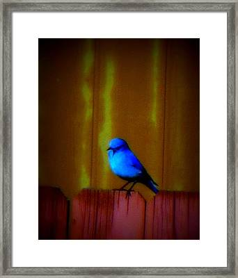 Framed Print featuring the photograph Bluebird Of Happiness by Karen Shackles