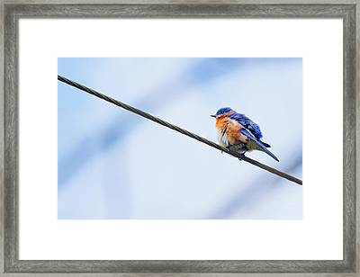 Framed Print featuring the photograph Bluebird Of Happiness by Linda Unger
