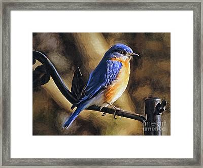 Bluebird Portrait Framed Print