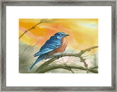 Bluebird Framed Print by Sean Seal
