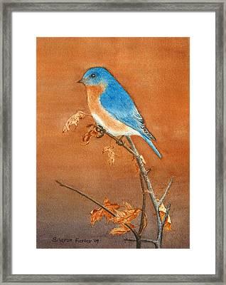 Bluebird Framed Print by Sharon Farber