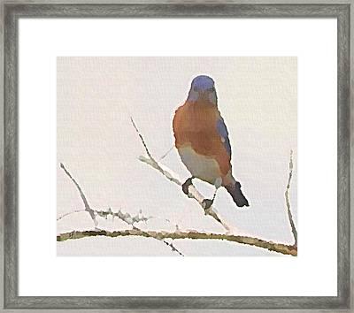 Bluebird Stare  Framed Print