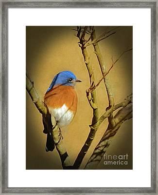 Bluebird Waiting For Spring Framed Print