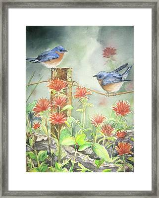 Bluebirds And Indian Paintbrush Framed Print