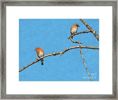 Bluebirds On A Crazy Limb Framed Print