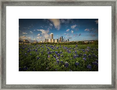 Bluebonnet City Framed Print