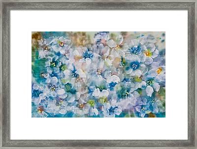 Bluebonnet Framed Print by Don  Wright