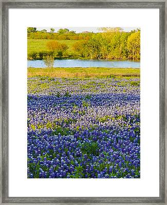 Bluebonnet Field Framed Print by Debbie Karnes