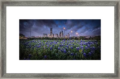 Bluebonnet Houston Framed Print