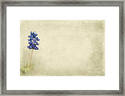 Bluebonnet Love Framed Print