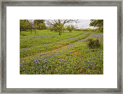 Bluebonnet Road - Texas Hill Country Framed Print