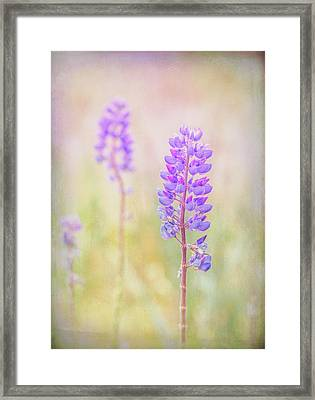 Framed Print featuring the photograph Bluebonnet by Russell Styles