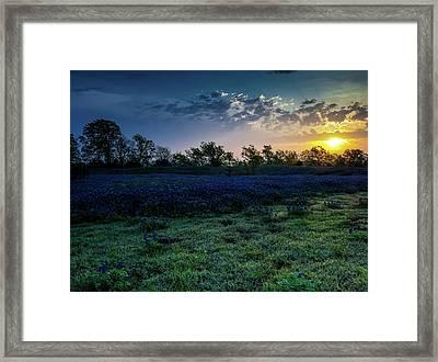 Bluebonnet Sunrise Framed Print by Mark Alder