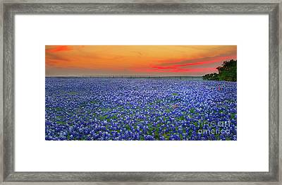 Bluebonnet Sunset Vista - Texas Landscape Framed Print by Jon Holiday