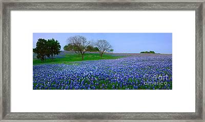 Bluebonnet Vista - Texas Bluebonnet Wildflowers Landscape Flowers  Framed Print by Jon Holiday