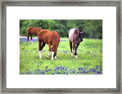 Bluebonnets And Horses Framed Print by JC Findley