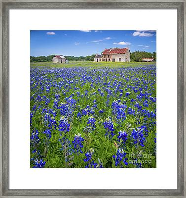 Bluebonnets In Marble Falls Framed Print by Inge Johnsson