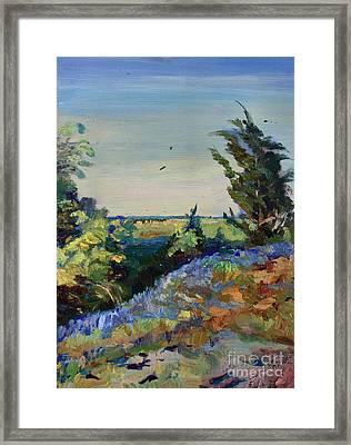 Bluebonnets On A Hill Framed Print by Maris Salmins