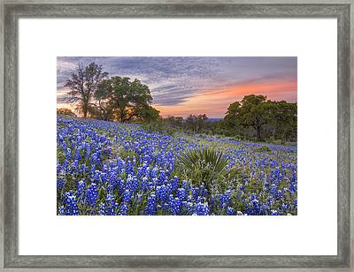 Bluebonnets Under A Texas Sunset 1 Framed Print by Rob Greebon