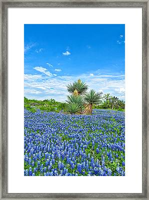 Bluebonnets With Yucca Framed Print by Tod and Cynthia Grubbs