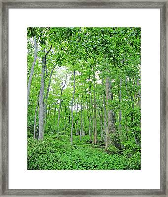 Blueboonet Swamp Baton Rouge La Framed Print by Lizi Beard-Ward