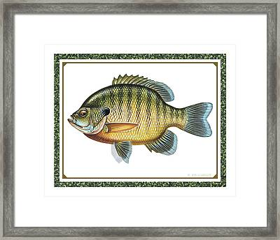 Bluegill Print Framed Print by JQ Licensing