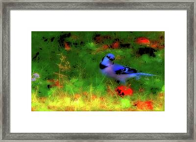 Bluejay-fall Approaching-a Rainbow Play Of Colors Framed Print