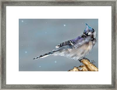 Framed Print featuring the digital art Winter Bluejay by Darren Cannell