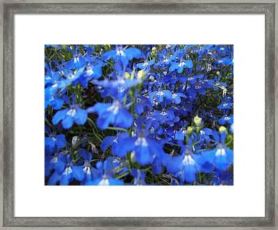 Bluer Than Blue Framed Print