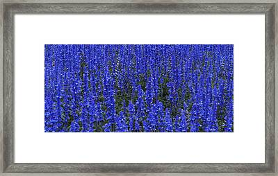 Blues 1 Framed Print by Alan Kepler