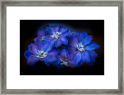 Blues Framed Print by Elena E Giorgi