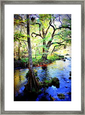 Blues In Florida Swamp Framed Print by Carol Groenen