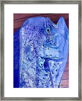 Blues Mahi Framed Print by Carey Chen