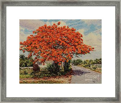 Bluff Poinciana Framed Print