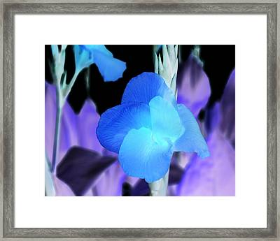 Blurple Field Framed Print by James Granberry