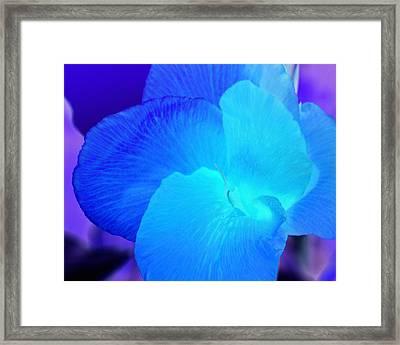 Blurple Flower Framed Print by James Granberry