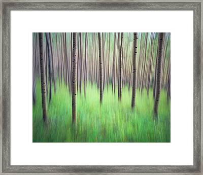 Blurred Aspen Trees Framed Print