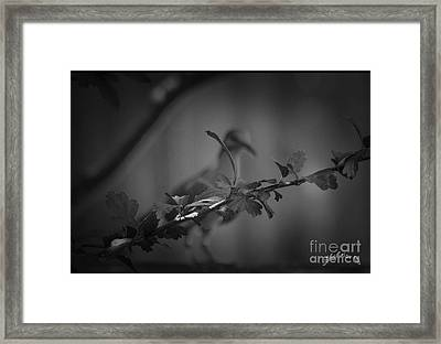 Blurred Beyond  Framed Print