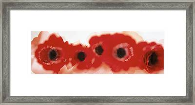 Blurred Flowers Framed Print by Panoramic Images