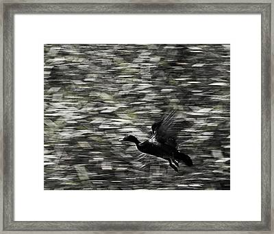 Framed Print featuring the photograph Blurry Bird by Ron Dubin
